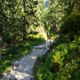 Leśna ścieżka.