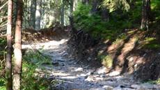 Wędrówka przez las.