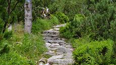 Po kamienistej ścieżce.