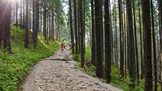 Dalej przez las.