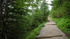 Wąska leśna ścieżka.