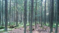 Szeroka leśna droga