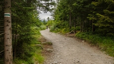 Droga prowadzi przez las.