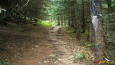 Droga przez las i korzenie.