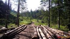 Wychodzimy z lasu