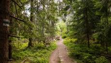 Wchodzimy do lasu.