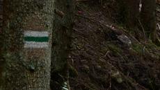 Początkowo idziemy przez las, droga spokojna i przyjemna.