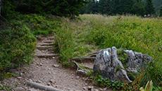 Wąska ścieżka przez Polanę Tomanową.
