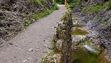 Ścieżką przy potoku.