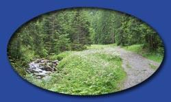 Droga przez las żółto-niebieskim szlakiem.