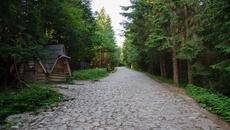 Droga na Polanę Kalatówki prowadzi przez 'kocie łby'.