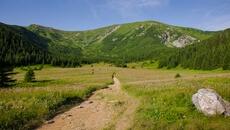 Początek zielonego szlaku na Przełęcz pod Kopą Kondracką.