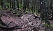 Przełęcz w Grzybowcu.