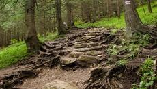 Z Przełęcz w Grzybowcu ruszamy prosto po kamiennym chodniku.